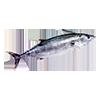 pesce azzurro_F35M1.png
